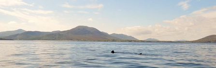 A solitary basking shark swimming with Malin Head in the background © Donal Griffin