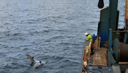 Curious common dolphins swim alongside the ship as crew look on © Donal Griffin