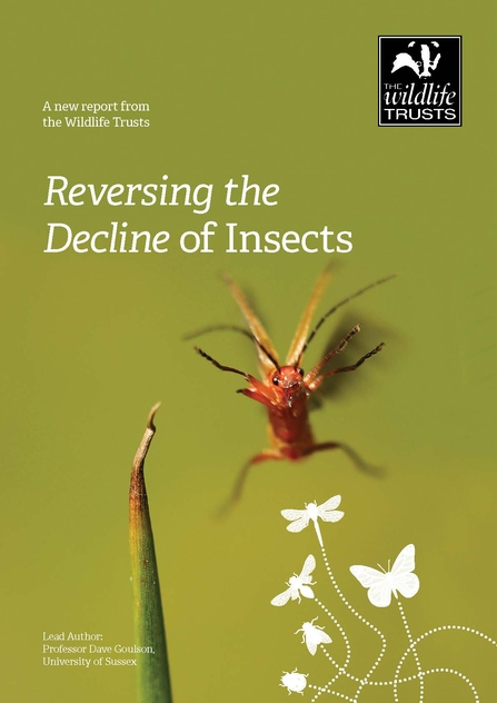 Front cover of the Reversing the Decline of Insects report