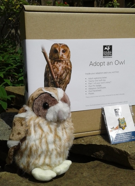 tawny owl adoption pack