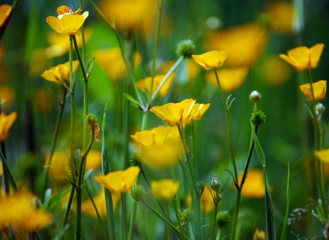 Buttercup Wildlife Trust