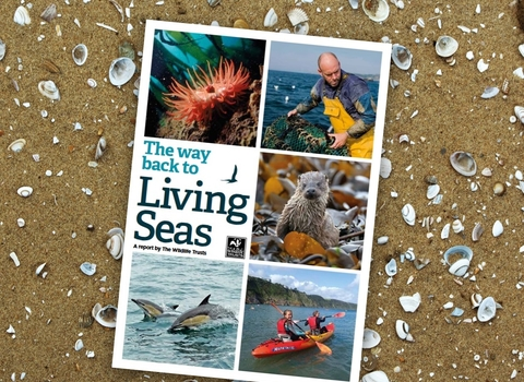Way back to Living Seas report cover
