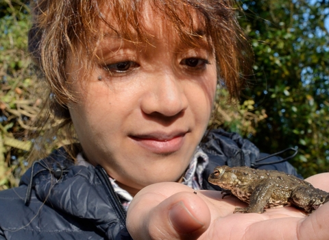 Woman looking at common toad